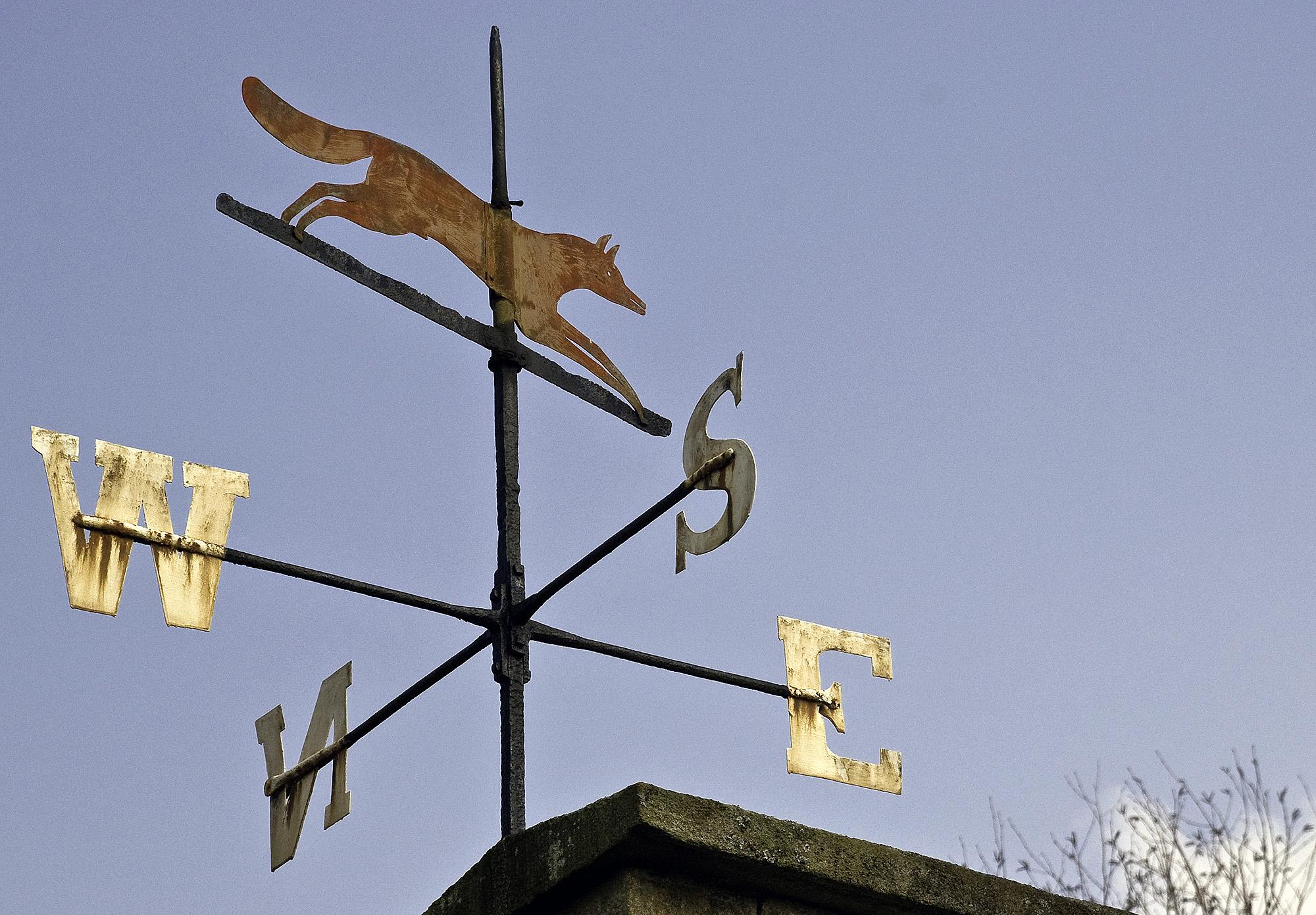 Red Fox on Weather Vane, County Durham